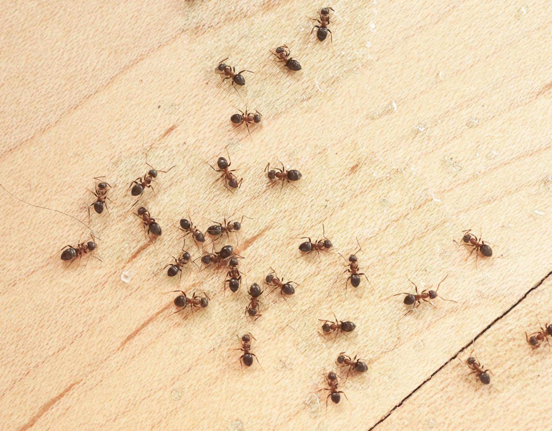 How to get rid of ants with easy methods