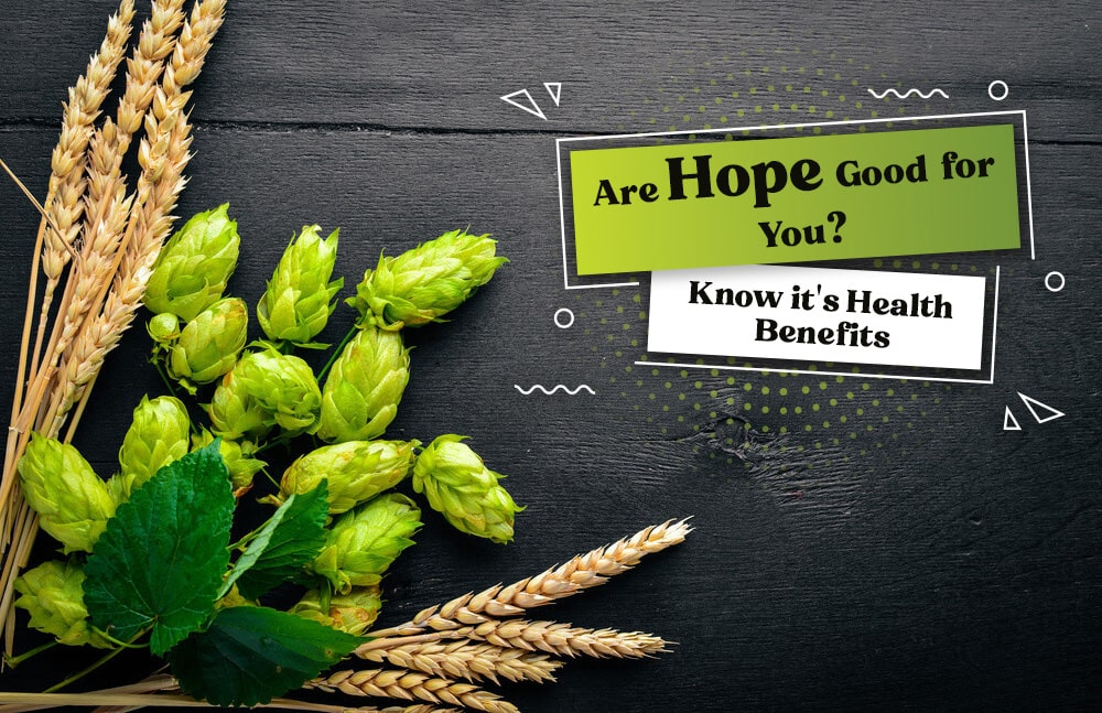 Are You Hops Good for You Know it's Health Benefits, Genmedicare